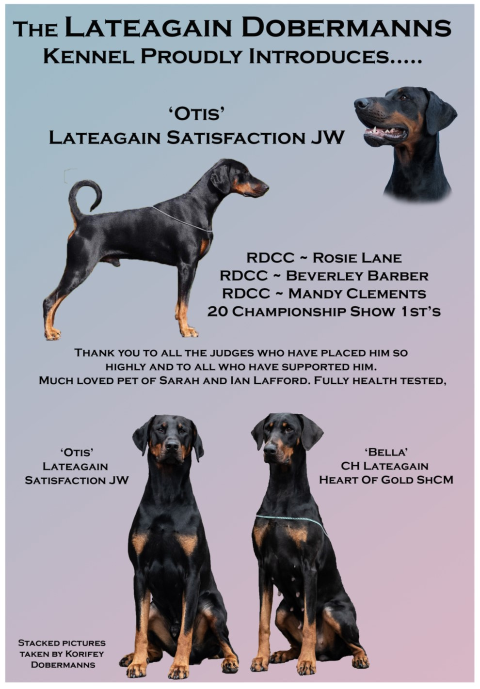 Lateagain Dobermanns