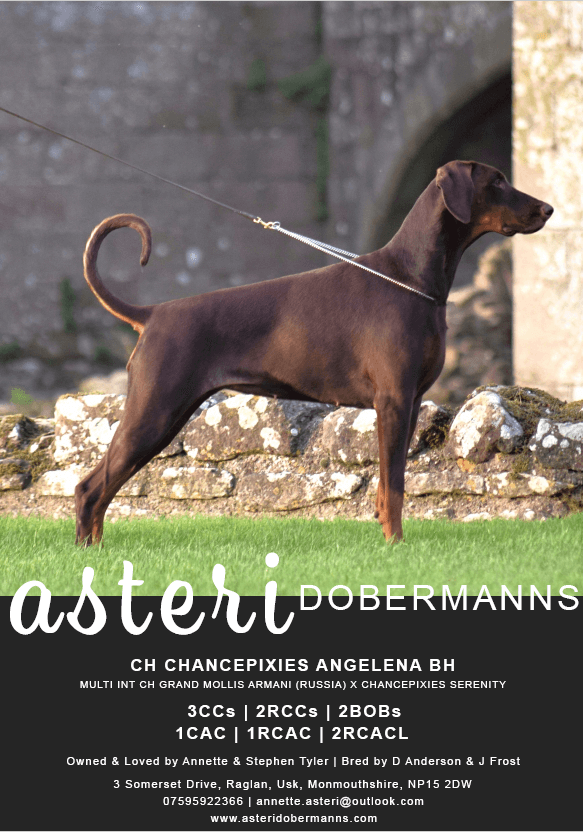 Asteri Dobermanns